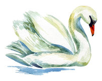 Watercolor swan. Royalty Free Stock Image