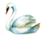 Watercolor swan. Stock Photography
