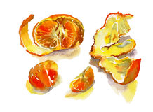 Watercolor tangerine with peel and some separeted slices. Original illustration Royalty Free Stock Photo