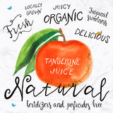 Watercolor tangerine. Vector illustration of watercolor tangerine , hand drawn in in 1950s or 1960s style. Concept for farmers market, organic food, natural royalty free illustration