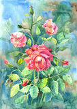 Watercolor with tea roses. Watercolor with summer tea roses stock images
