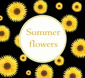Watercolor template floral sunflowers card and flier. On black background, summer style of field`s flowers stock illustration