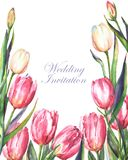 Watercolor template of wedding invitation card with pink and white tulips. Hand-drawn watercolor template of wedding invitation card with pink and white tulips Royalty Free Illustration