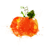 Watercolor thanksgiving pumpkin Royalty Free Stock Photos