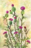 Watercolor thistle illustration. Poster, postcard or herbal back. Ground suitable for summer design vector illustration