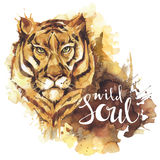 Watercolor tiger with handwritten words Wild Soul. African animal. Wildlife art illustration. Can be printed on T-shirts. Bags, posters, invitations, cards Royalty Free Stock Photo