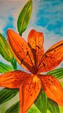 Watercolor Tiger Lily on the skyblue background royalty free stock image