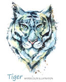 Watercolor tiger on the white background. African animal. Wildlife art illustration. Can be printed on T-shirts, bags Royalty Free Stock Images
