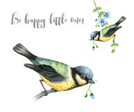 Watercolor Tit Birds Royalty Free Stock Photography