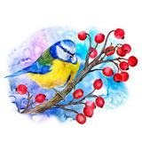 Watercolor titmouse  on branch of  viburnum  Stock Images