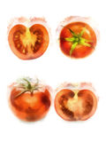 Watercolor tomato. Red tomatoes, watercolor painting on white background vector illustration