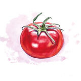Watercolor tomato with colored spot Royalty Free Stock Photos