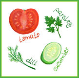 Watercolor tomato, cucumber, dill and parsley with hand-drawn vegetables titles Stock Image