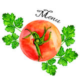 Watercolor tomato hand drawn painting illustration Stock Photos