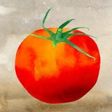 Watercolor tomato illustration with background royalty free illustration