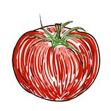 Watercolor tomato Stock Photography