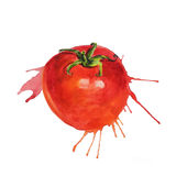 Watercolor tomato sketch. In living style with splatter of paint Royalty Free Stock Images