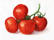 Watercolor tomatoes. Watercolor painting, still life, tomatoes on a light background Stock Images