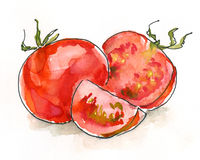 Free Watercolor Tomatoes Royalty Free Stock Image - 31753376