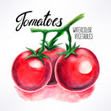 Watercolor tomatoes Royalty Free Stock Images