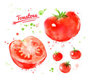 Watercolor tomatoes. Stock Image