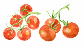 Watercolor tomatoes set. Watercolor tomatoes set on white background. Healthy and ripe fresh vegetables for cooking and decoration Stock Photos