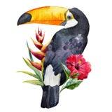 Watercolor toucan Stock Photography