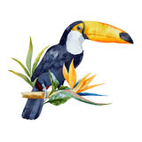 Watercolor toucan Stock Photo
