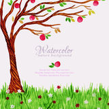 Watercolor tree with apples and grass Stock Photo