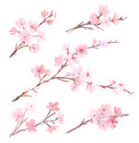 Watercolor with tree in blossom. Watercolor with spring tree in blossom Stock Photography