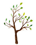 Watercolor tree with green leaves isolated on white background Stock Image