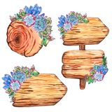 Watercolor tree slices with succulent plants vector illustration