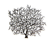 Watercolor tree. Tree without leaves Stock Images