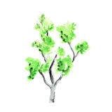 Watercolor tree on white background Stock Photos