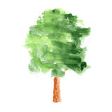 Watercolor tree on white background Stock Photography
