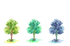 Watercolor trees. Hand drawn brush paint isolated on white. Color tones of tree leaves at different day light Royalty Free Stock Photography