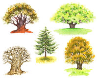 Watercolor trees Stock Photography