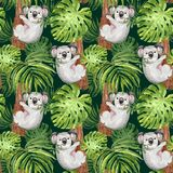 Watercolor trendy tropical pattern with hand painted koala, palm and monstera leaf on dark green background. Summer botanical. Cute koala bear on a tree seamless royalty free illustration