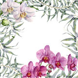 Watercolor tropic card with white and pink orchids and eucalyptus. Hand painted floral illustration with eucalyptus Royalty Free Stock Image