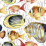 Watercolor tropic sea pattern. Hand painted tropic fish: angelfish, butterflyfish, clownfish and coral isolated on white Stock Images