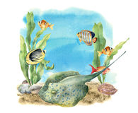 Watercolor tropic sea print. Hand painted tropic fish, seaweeds, stingray, pebbles and seashell isolated on white. Background. Underwater illustration for Stock Photography