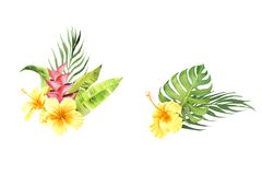 Watercolor tropical bouquet set with monstera leaf and hibiscus flowers stock illustration