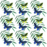 Watercolor  tropical butterflies pattern. Watercolor tropical butterflies and berries seamless pattern Royalty Free Stock Images