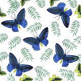 Watercolor  tropical butterflies pattern Royalty Free Stock Photos