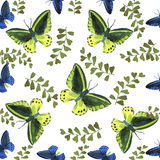 Watercolor  tropical butterflies pattern. Watercolor tropical butterflies and  leaves seamless pattern Royalty Free Stock Photography