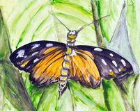 Watercolor tropical butterfly Royalty Free Stock Images