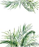 Watercolor tropical card with exotic palm leaves. Hand painted floral illustration with banana and coconut branch Stock Photos