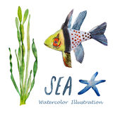 Watercolor tropical fish. Hand painted realistic illustration Stock Image