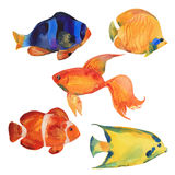 Watercolor tropical fish Royalty Free Stock Photos