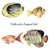 Watercolor tropical fish set. Hand painted Royal angelfish, Butterflyfish, Sea goldie and Clownfish isolated on white Royalty Free Stock Photography